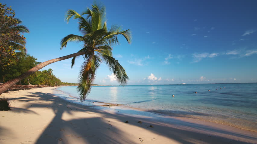 Island tropical beach with white sand, turquoise sea water and coconut palm trees. Punta Cana, Dominican Republic | Shutterstock HD Video #1005616345