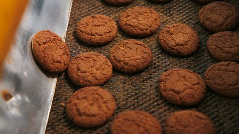 Cookies are moving on the conveyor line. Oatmeal cookies are brown. Biscuits and gingerbreads on a conveyor belt in a bakery.