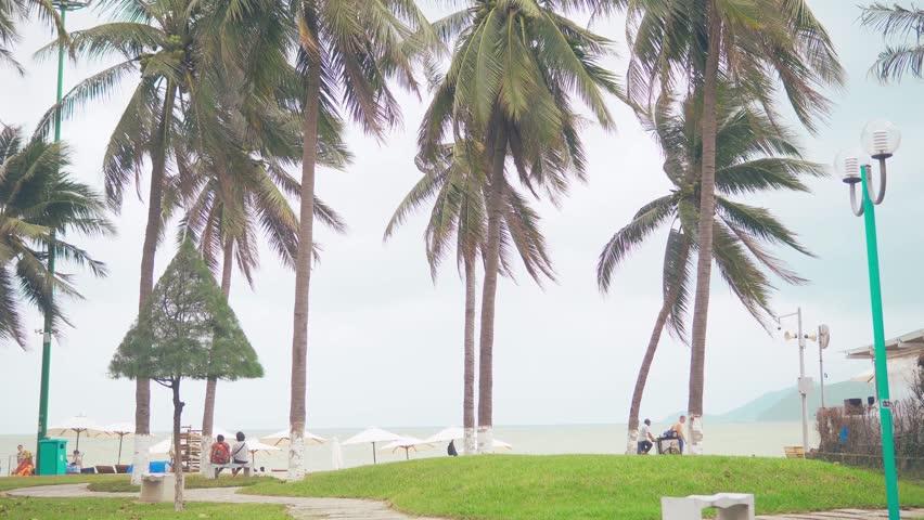 Romantic couple walk at tropical beach near palm tree