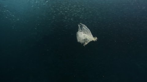 Piece of plastic floating in ocean with shoal of sardines swimming behind