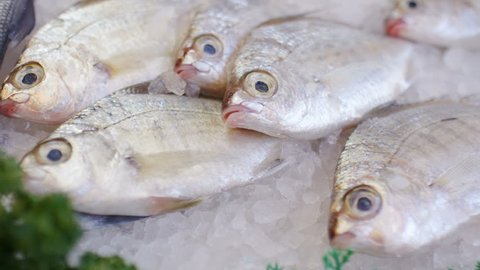Camera moves along a series of fish resting on ice at a fishmongers shop