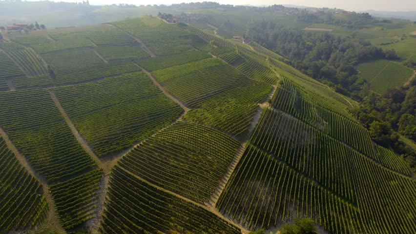 Aerial view if Italian hill full of vineyards, Piedmont region.