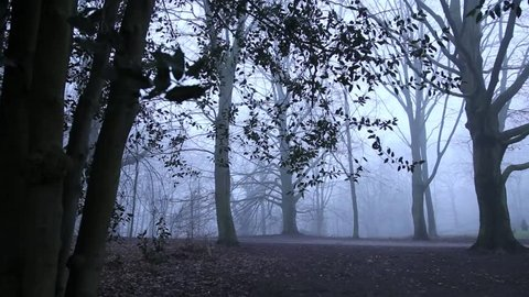 Strollers in foggy forest with mystical atmosphere at dusk, full HD video footage 25 fps