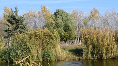 very small river with the reeds in my village