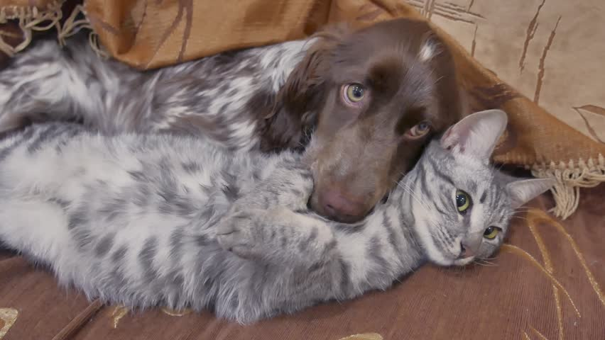 Cat and friendship a dog are sleeping together indoors funny video. cat and dog | Shutterstock HD Video #1007770555