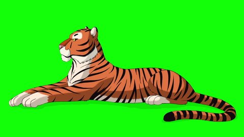 Big Tiger Lies and Growls. Animated Motion Graphic Isolated on Green Screen