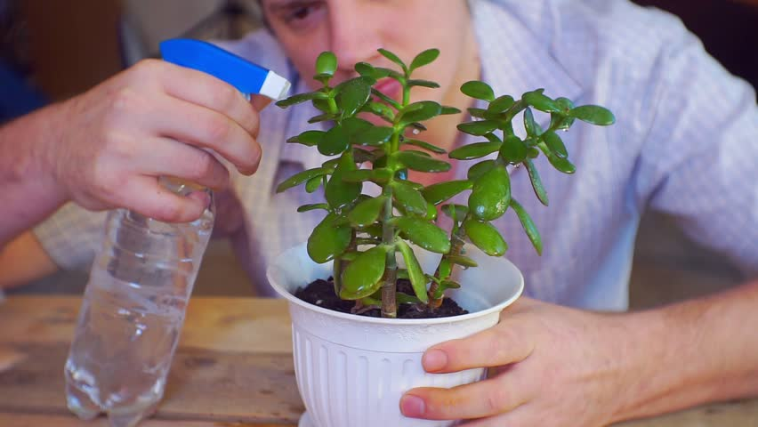 caring owner carefully watering his plant