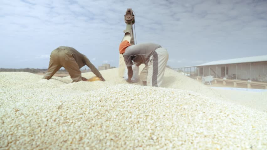 Shot in 50p. White maize / corn is delivered to the depot in Mozambique for sorting and preparation to be processed into maize meal (part of a the staple diet through large parts of Africa. | Shutterstock HD Video #1007958385