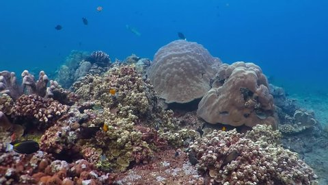 Snorkeling on the tropical coral reef with variety of ocean fish. Underwater wide seascape scenery with fish and corals. Scuba diving on the coral reef.