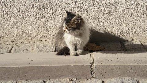 Cat, Cat Kid in Street