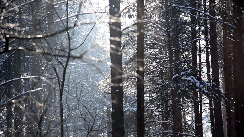 Falling Snow in a Winter Forest. Stock Video | Shutterstock HD Video #1008268675