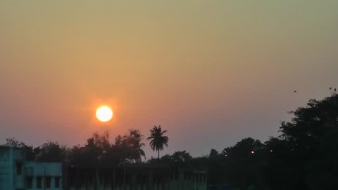 During Sunset Birds Flying With Yellow Sky Background and Coconut Tree Foreground At Ennore, North Chennai, Tamil Nadu, India