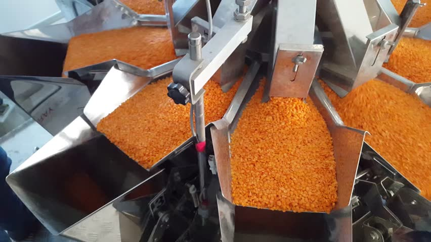 Raw organic red lentils being scooped up in factory