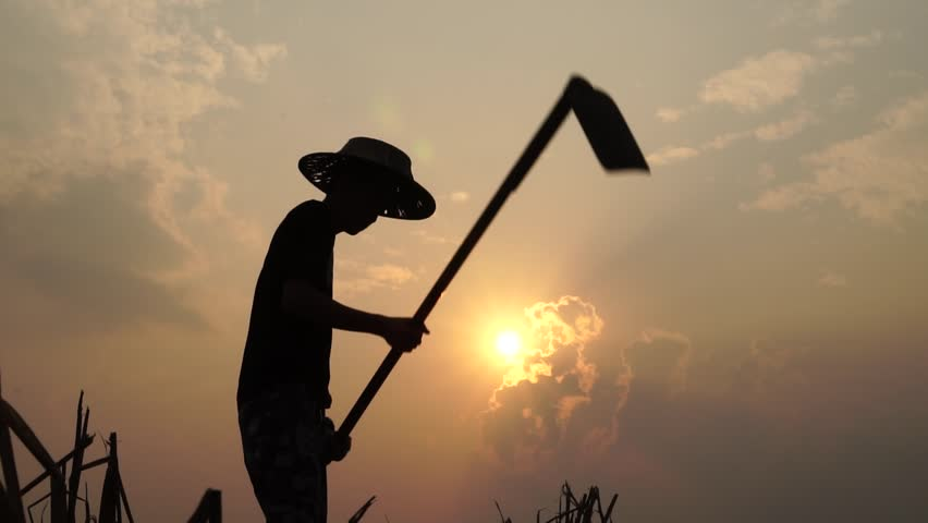 Agriculture life Concept : Black silhouette of a worker or gardener holding spade is digging soil at sunset light, Slow motion shot