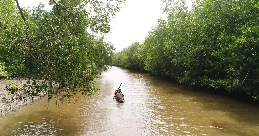 Aerial View of Explore Mangrove Forest at Kurau