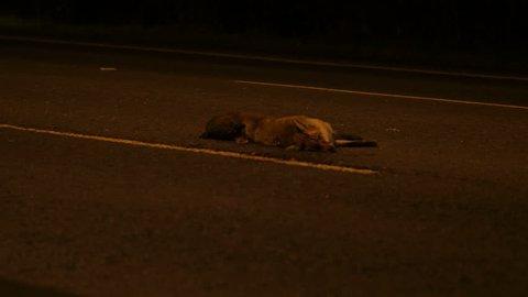 Tilt up to Dead Fox on Road. Option B. England.