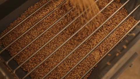 Grinding of malt for producing beer at the brewery. The crushing of the malt in an electric mill. Close up