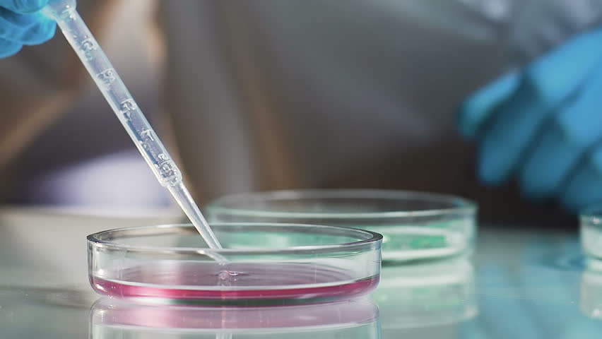 Research of cosmetic products, scientist using petri dish, quality control test