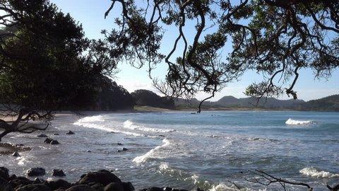 Scenic view of Hot Water beach through pohutukawa trees, Coromandel Peninsula, New Zealand