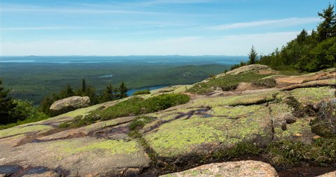 A motion controlled dolly time lapse passing by flower and rocks on Cadillac Mountain in Acadia National Park, Maine on a summer day.