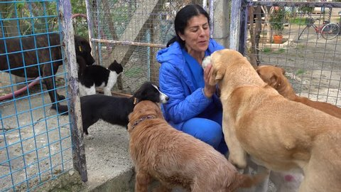 4K Woman surrounded by dogs in the shelter kisses one of them