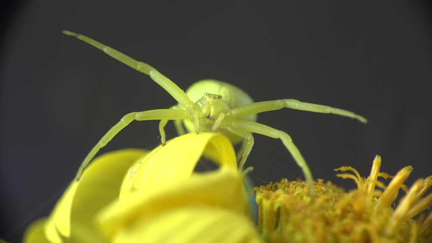 Header of Arachnida