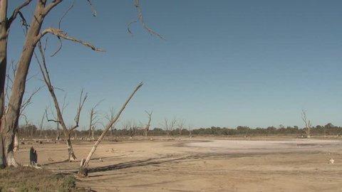 Lake Pond Kings Billabong Wildlife Reserve Dry Drought Lake Bed Mud Dead Trees
