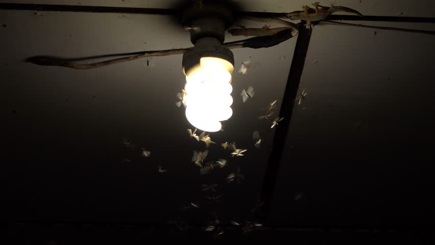 Moths Termites And Insects Playing Bulb Light At Night