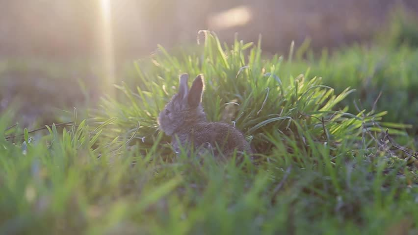 gray rabbit in the garden , little Bunny