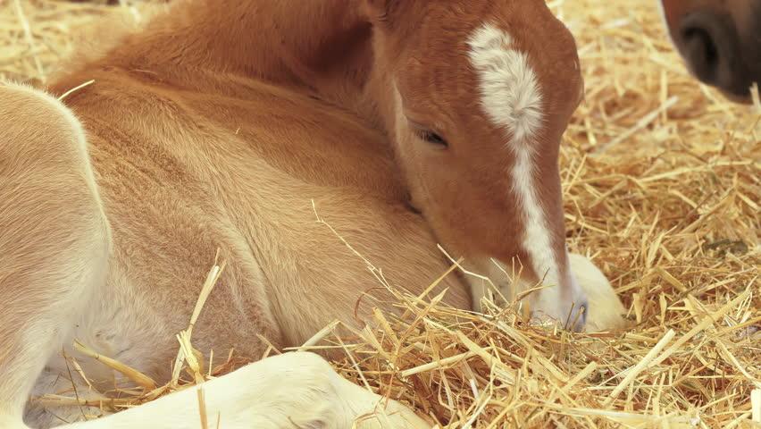 Header of foal