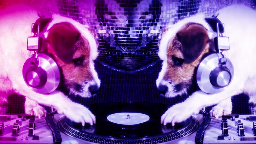 the world's most famous dj dog on the ones and twos, scratching. a cute jack russell dog djing in a disco setting