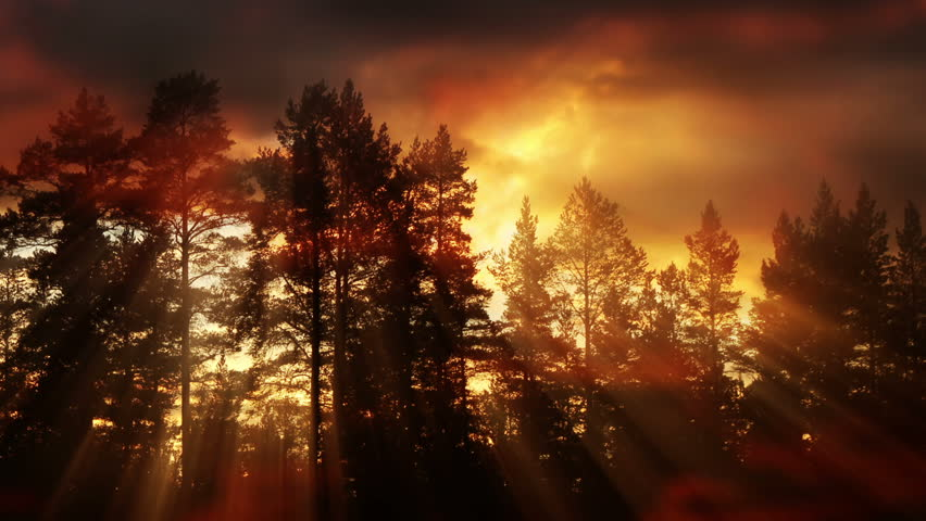 Evening Clouds And Sunlight Rays Beaming Through Trees   Shutterstock HD Video #1009902635