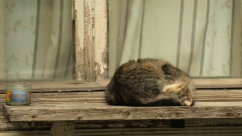 Relaxed cats sleeping on windowsills and house roofs in Tbilisi, stray animals