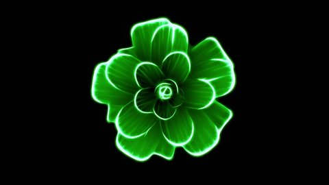 opening long blooming green flower time-lapse 3d animation isolated on background new quality beautiful holiday natural floral cool nice 4k video footage