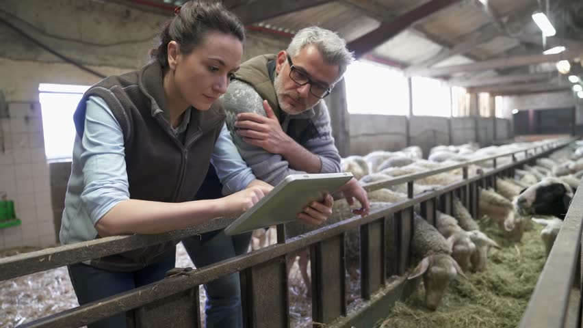 Sheep breeder with veterinary in shed using digital tablet | Shutterstock HD Video #1010323265