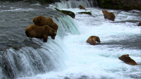Grizzly brown bears river fishing at Brooks Falls for food remote wilderness Katmai National Park and Reserve Alaska USA