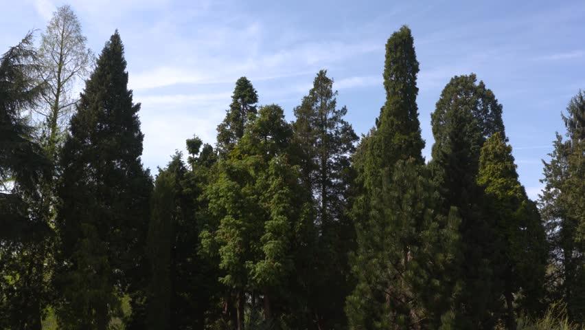 Header of pinetum