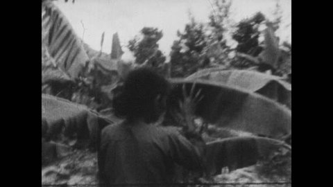 VIETNAM 1960s: Woman walks through palm leaves in jungle. Large gathering of people in coolie hats.