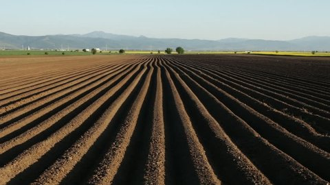 Potato field in spring after sowing - camera moves near furrows on farmland in sunset time
