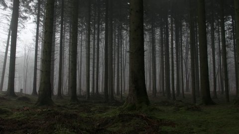 Eerie forest of trees and mist