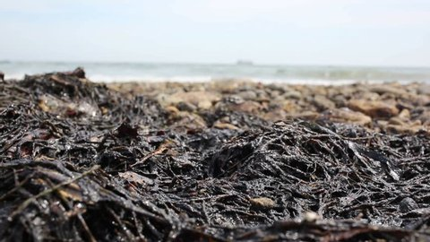 ecological catastrophe, sea, oil, Russia, the Sea of ??Japan. on the coastal strip of oil from fuel shale.