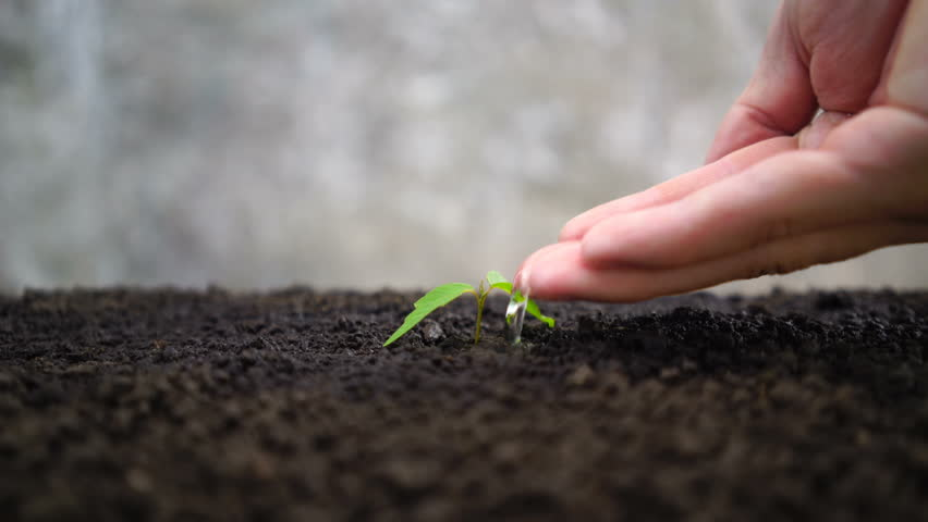 Man hand watering young plant | Shutterstock HD Video #1011052535