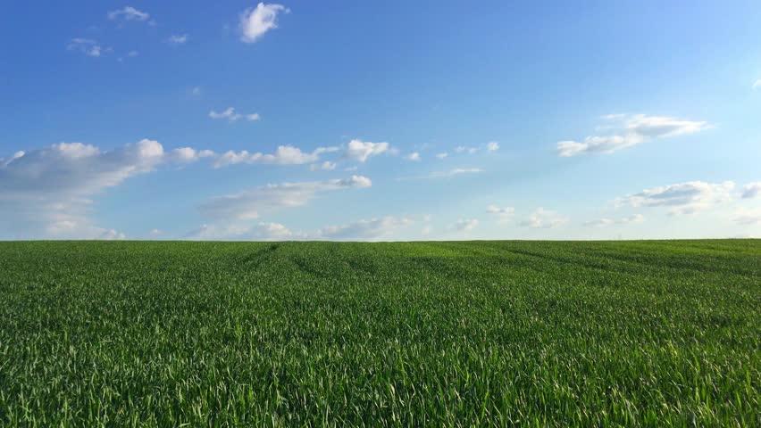 4k Green Field On The Blue Sky Background