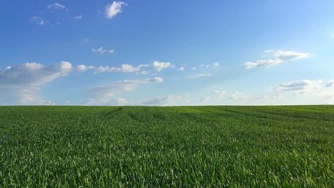 4k Green Field On The Blue Sky Background