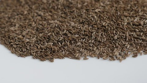 Close-up pan on meridian fennel seed 4K video