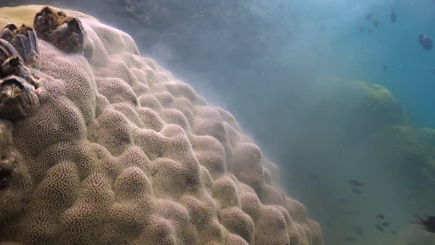 Coral Spawning at Day Time  | Shutterstock HD Video #1011233285