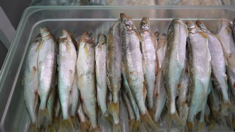 Close-up view on lot of frozen smelt fish with silver scales on counter at seafood market. Concept: healthy eating, delicious, seafood market, Asian cuisine.