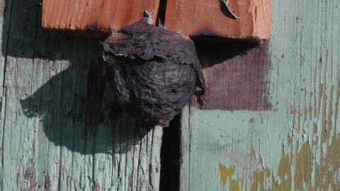 setting wasp nest in fire, burning, slow motion, part 2