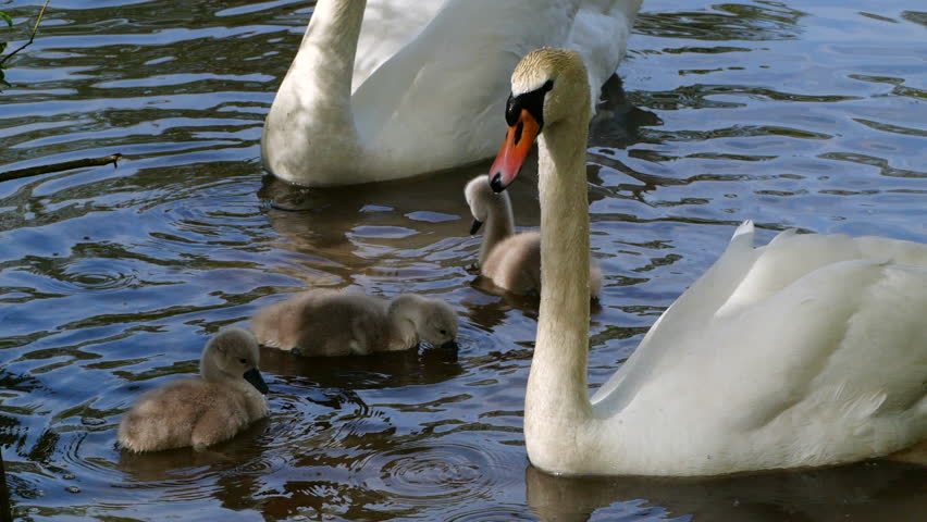 swan river single parents The people living in zip code 55784 are primarily white the number of seniors is extremely large while the number of people in their late 20s to early 40s is extremely large there are also a large number of families and a small number of single parents.