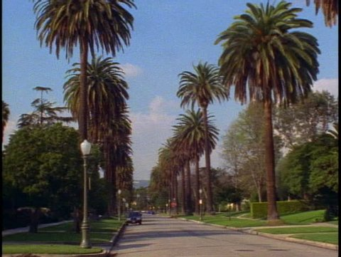 LOS ANGELES, 1999, Palm tree lined street in Hancock Park